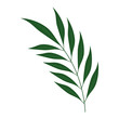 tropical palm leaf icon