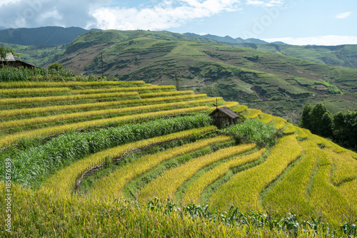 In de dag Honing Terraced rice field landscape of Y Ty, Bat Xat district, Lao Cai, north Vietnam