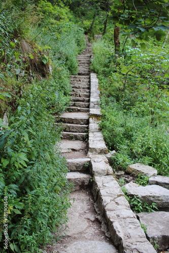 Foto op Plexiglas Weg in bos Chorwackie podroze