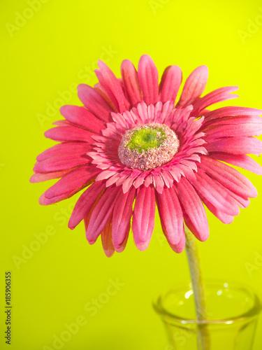 Aluminium Gerbera Pink Flower