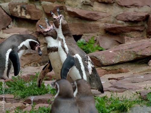 Aluminium Pinguin Pinguingruppe