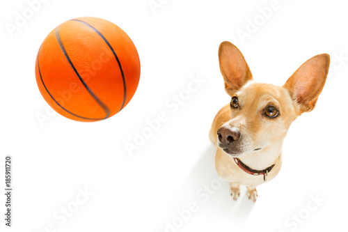 Foto op Plexiglas Crazy dog basketball player dog