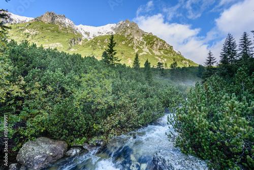Fotobehang Pistache mountain river in summer