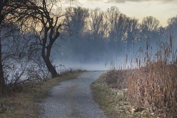 camminando in contro alla nebbia