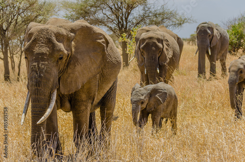 Elephant Family in Tarangire National Park, Tanzania