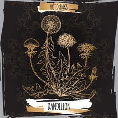 Dandelion aka Taraxacum officinale sketch on black. Hot drinks collection.