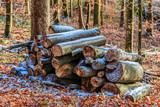 Holzstapel im Wald - 186031909