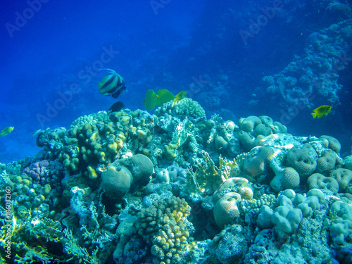 Fotobehang Donkerblauw Underwater coral reef on the Red sea. Sinai peninsula, Egypt