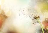 Dandelion. - 186061913