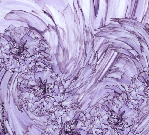 Aluminium Purper Abstract background of a violet clove. Floral background with purple flowers of carnations. Nature..