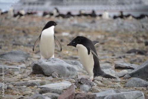 Fotobehang Pinguin Two Penguin on Antarctica