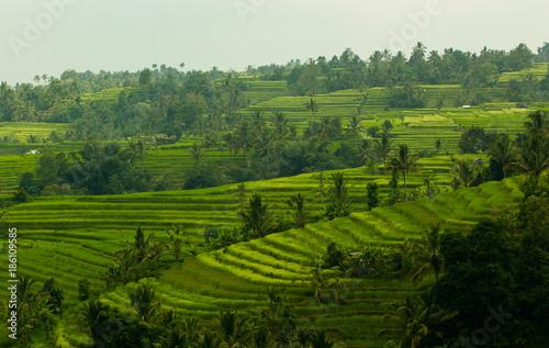 Fotobehang Bali Rice field in Jatiluwih