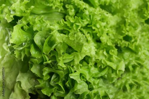 Fotobehang Planten Leaves of fresh green salad, closeup