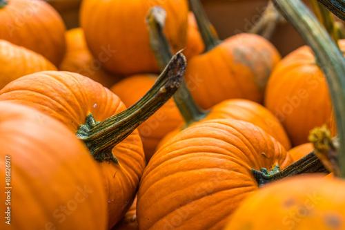 Poster Oranje eclat Pumpkins