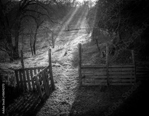 Foto op Plexiglas Weg in bos Bocage intemporel d'Anjou