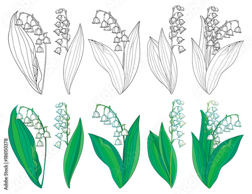 Fototapeta Vector set with outline Lily of the valley or Convallaria flowers and leaves in green and black isolated on white background. Ornate May bells in contour style for spring design or coloring book.