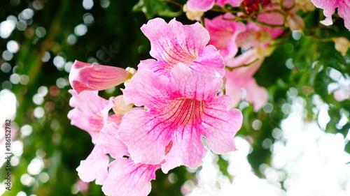 Aluminium Azalea Flower