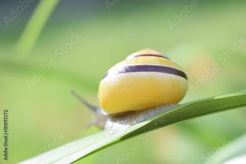 Foto op Canvas Natuur escargot jaune