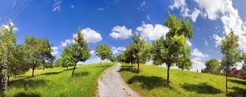 Weg durch die Obstbaumwiese - 186204174