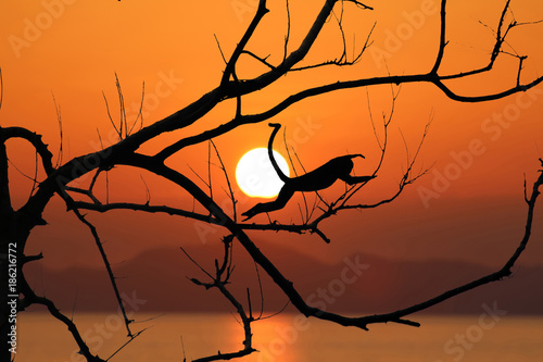 Poster Oranje eclat Silhouette monkey jump on the leafless trees and red sky sunset