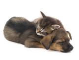 sleep kitten and puppy - 186219539