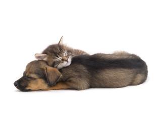 sleep kitten and puppy