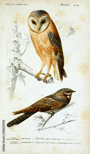 Illustration of birds.
