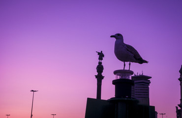 Barcelona Christopher Columbus statue and seagull silhouette over sunset and blue hour clear sky