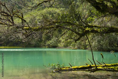 In de dag Olijf Mystic forest lagoon Magdalena in Huehuetenango, Guatemala,
