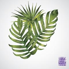 Vector green palm leaf.
