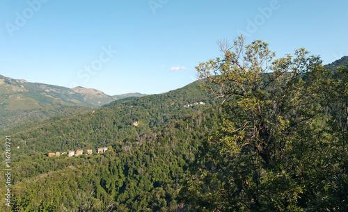 Foto op Aluminium Blauw chestnut tree in Castagniccia mountain