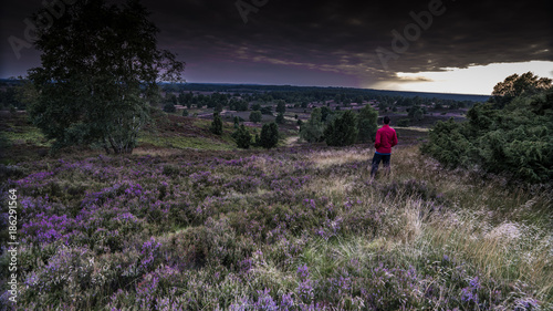 Foto op Canvas Aubergine summer in german Heath