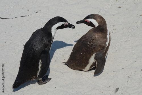 Aluminium Pinguin couple