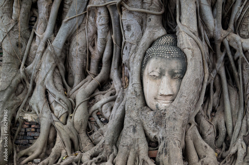Fotobehang Boeddha Buddha Face in a Tree