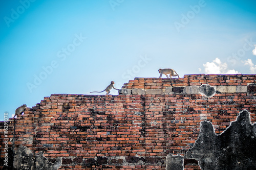 Aluminium Thailand Monkeys on a wall