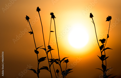 Poster Oranje eclat Grass in the rays of sunset as background