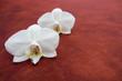 Orchidée sur plan de table - 186306792