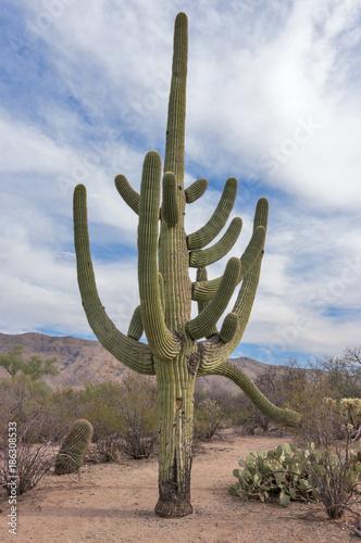 Fotobehang Arizona Arizona Desert Landscape