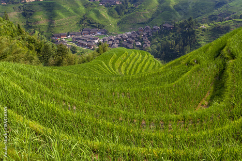 Foto op Aluminium Rijstvelden Beautiful view Longsheng Rice Terraces near the of the Dazhai village in the province of Guangxi, China; Concept for travel in China