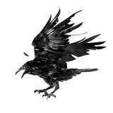drawn monochrome feathered crow bird isolated - 186341572