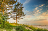 Summer coastal landscape with forestry dunes and pine trees, Baltic Sea  - 186358137