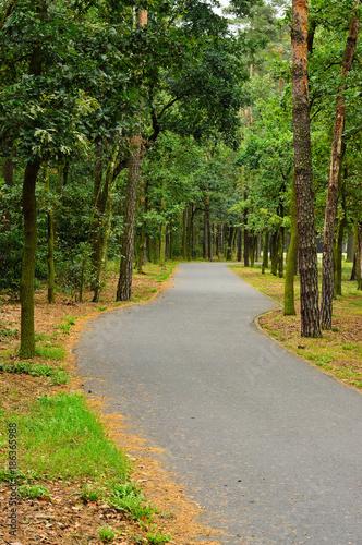 Foto op Plexiglas Weg in bos Droga w zielonym lesie wśród drzew w pochmurny dzień.
