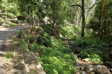 Landschaft in der Knuckles Range bei Kandy in Sri Lanka