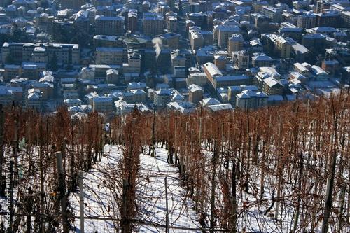 Vineyard winter vinejard