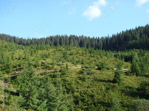Foto op Canvas Pool the wild nature of the mountain forests of the Ukrainian Carpathians.