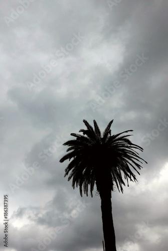 Keuken foto achterwand Afrika Una palma tra le nuvole - Inverno