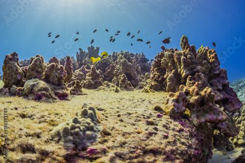 Foto op Aluminium Blauw Tropical Reef with Fish