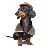 Funny dachshund dog with Cowboy costume and western hat isolated on white background.