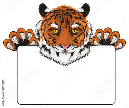 tygrys, dziki kot, kot, paski, zwierzę, zoo, drapieżnik, pazury, ryk, Indie, ilustracja, kaganiec, łapy, przytrzymaj, papier