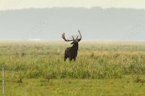 Aluminium Hert large fallow deer stag